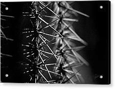 Saguaro Nights Acrylic Print by Vicki Pelham