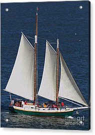 Sailboat In The San Francisco Bay . 7d7900 Acrylic Print by Wingsdomain Art and Photography