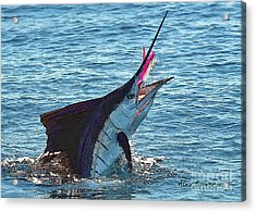 Sailfish Shake Acrylic Print by Alex Suescun