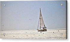 Sailing Acrylic Print by Anusha Hewage