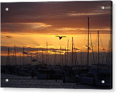 Sails At Sunset Acrylic Print by Kelly Jones