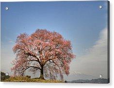 Sakura Sakura 2 Acrylic Print by Tad Kanazaki