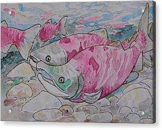 Salmon Spawn Acrylic Print by Jenn Cunningham