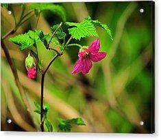 Salmonberry Acrylic Print
