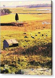 Salt Marsh Pasture Acrylic Print