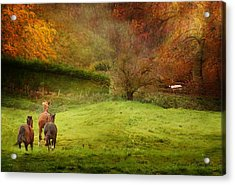 Salthrop Park Acrylic Print