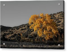 Acrylic Print featuring the photograph Salto's Tree by Atom Crawford