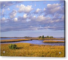 Saltwater Marshes At Cedar Key Florida Acrylic Print by Tim Fitzharris