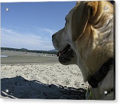 Acrylic Print featuring the photograph Salty Dog by Brian Sereda