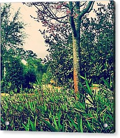 Same #beautiful #tree Different #angle Acrylic Print