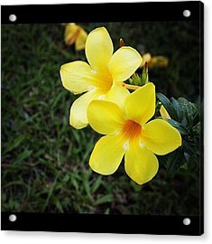 Same Previous Flower From A Different Acrylic Print