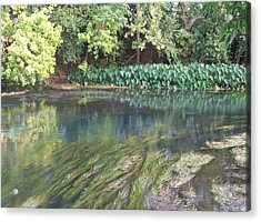 Acrylic Print featuring the photograph San Marcos River Texas by Elizabeth  Sullivan