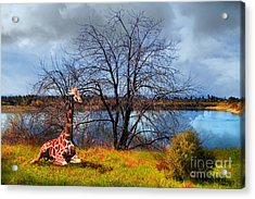 Sanctuary . 7d12636 Acrylic Print by Wingsdomain Art and Photography