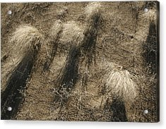 Sand And Shadows Acrylic Print