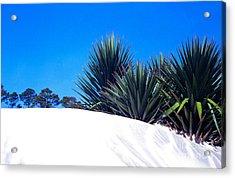 Sand Dune And Spanish Bayonet Acrylic Print by Thomas R Fletcher