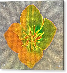 Sand Flower Acrylic Print by Mitch Shindelbower