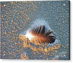 Acrylic Print featuring the photograph Sand Sculptured Feather  by Michele Penner