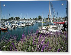 Santa Cruz Harbor - California Acrylic Print
