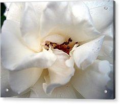 Satin White Acrylic Print