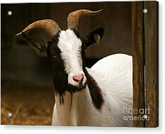 Acrylic Print featuring the photograph Say Cheese by Julie Clements