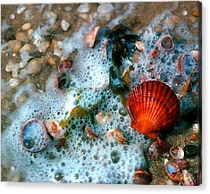 Acrylic Print featuring the photograph Scallop And Seaweed 11c by Gerry Gantt