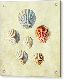 Scallop Shells Acrylic Print by Paul Grand Image
