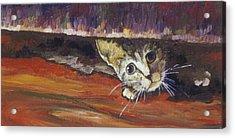 Scaredy Cat Acrylic Print by Sandy Tracey