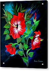 Scarlet Hibiscus Acrylic Print by Fram Cama