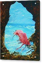 Scarlet Ibis Landing Acrylic Print