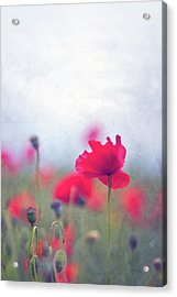Scarlet Poppies In Painterly Style Acrylic Print by Image by Catherine MacBride