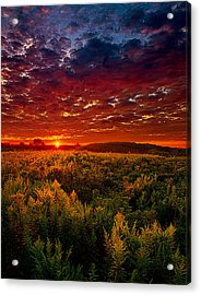 Scarlett Acrylic Print by Phil Koch