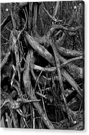 Scary Branches Acrylic Print