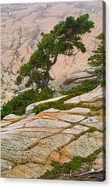 Schoodic Cliffs Acrylic Print by Brent L Ander