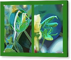 Science Class Diptych - Praying Mantis Acrylic Print by Steve Ohlsen