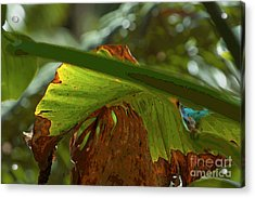 Scorched Ear Acrylic Print