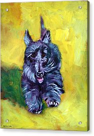 Scottie Trot  - Scottish Terrier Acrylic Print by Lyn Cook