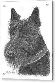Acrylic Print featuring the drawing Scottish Terrier by Jim Hubbard