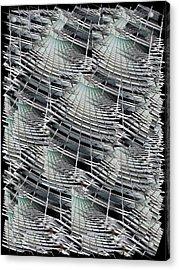 Scraper Acrylic Print by Tim Allen