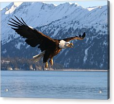 Screaming Eagle Acrylic Print by Doug Lloyd
