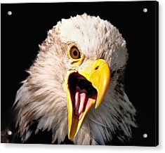 Screaming Eagle II Black Acrylic Print
