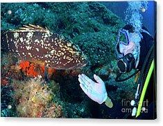 Scuba Diver With A Dusky Grouper Acrylic Print by Sami Sarkis