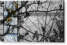 Sea Beyond The Branches Acrylic Print by Lee Yang