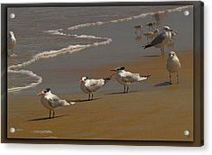 Sand And Sea Birds Acrylic Print