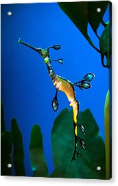Sea Dragon Acrylic Print by Anna Rumiantseva