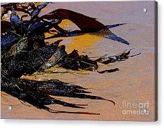 Pismo Beach Sea Drift Acrylic Print