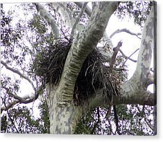 Sea Eagle Nest Acrylic Print by Joanne Kocwin