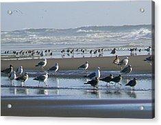 Sea Gulls And Breakers Acrylic Print