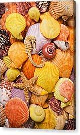 Sea Horse Starfish And Seashells  Acrylic Print by Garry Gay