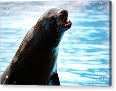 Sea-lion Acrylic Print by Carlos Caetano