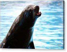 Sea-lion Acrylic Print by Carlos Caetano